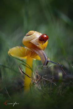 Snail & ladybug on mushroom.