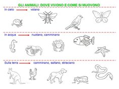 Italian Language, Montessori, Science, Christian, Teaching, Education, School, Google, Victoria