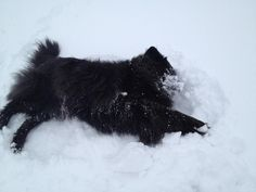 A dog snow angel courtesy of Pepper:)