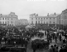 Cattle and crowds fill the square in Dungarvan on a fair day ca. 1900 #Irish #history