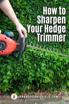 Sharpening hedge trimmer blades is not hard! Learn how to clean and how to sharpen hedge trimmer blades. Also when to sharpen your hedge trimmer blades. Learn detailed instructionson how to clean and sharpen the blades yourself with a few simple supplies. Step-by-step directions on how to remove rust and sharpen your shears or hedge trimmers yourself. #Yard #Hedges #FrontYard #Landscaping #Gardening #UrbanOrganicYield Garden Projects, Garden Ideas, Diy Projects On A Budget, Lawn Maintenance, Starting A Garden, How To Remove Rust, Diy Outdoor Furniture, Ornamental Grasses, Organic Vegetables