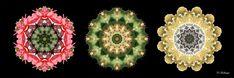Mandalas ''Sommertraum'' auf Leinwand 20cm x 60cm, mit schwarzen Seitenrand 2cm von Kreatives by Petra    #kreativesbypetra #Mandala #mandalaart #Natur #nature #fotografie #photography #naturfotografie #naturephotography #makro #macro #makrofotografie #macrophotography #Spiegelung #Spiegelungen #abstrakt #Abstract #Reflexion #adobephotoshop #photoshop #canon #CanonEOS #farben #colours #Leinwand #canvasprint #leinwanddruck #blatt #leaf #Kaktus #cactus #blüte #blossom #sommer #summer Mandala Art, Petra, Canon, Crochet Earrings, Photoshop, Collagen, Jewelry, Mandalas, Macro Photography