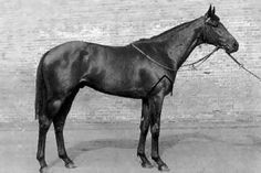 Mill Reef (1968–1986) was a Champion Thoroughbred racehorse and sire. He was bred in the USA but trained in the UK throughout his racing career. Mill Reef won twelve of his fourteen races, coming second in the other two. He was an outstanding two-year-old in 1970, and proved better at three, winning the Epsom Derby, the Eclipse Stakes, the King George VI and Queen Elizabeth Stakes and the Prix de l'Arc de Triomphe. He won both his starts as a four-year-old before his career was ended by…