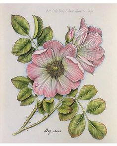 So delicate  by @morena_vajak from The Flower Year. From the pair colouring event with @susie_loir on Facebook xx