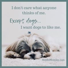 I truly believe animals are an excellent judge of character... | Read about my Dog Mom Life at Not So Mommy..., an infertility, childless, & dog mom blog. | Dog Mom | Dog Moms | Dog Mommy | Fur Mom | Fur Moms | Fur Mama | Fur Mamas | Fur Mommy | Pet Parent | Pet Parents | Dog Quote | Dog Quotes | I want dogs to like me | Dog Mom Life | Dog Mom for Life | Animal Lover | Animal Lovers | Dogs and Puppies | Puppies and Dogs | Dog | Dogs | Puppy | Puppies | Dog Lover | Dog Lovers | Dog Mama Puppies Puppies, Cute Puppies, Cute Puppy Photos, Mom Day, Dog Quotes, Mom Blogs, Four Legged, Dog Mom, Fur Babies