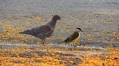 Harmonia entre espécies de aves.