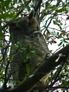 an owl My Animal, Owl, Animals, Animales, Animaux, Owls, Animal, Animais