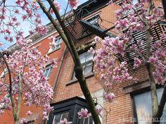 Qué hacer en abril en Nueva York. Temperaturas, propuestas y consejos para disfrutar del inicio de la primavera.