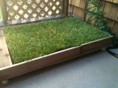 Amazon.com : Fresh Patch Disposable Dog Potty With REAL Grass   As Seen On