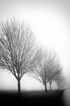 Black Ink on a Wet Sky - Black and White Photograph of Row of Trees in Fog (IMG_7844) #LandscapeBlackAndWhite
