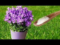 (47) Zastosowań sody oczyszczonej w ogrodzie, o których mało kto wie - YouTube