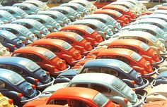 A Dream Line Up Of Volkswagen Beetles In A variety Of Colo… | Flickr