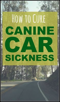 There's nothing worse than when your dog gets ill in the car. However there are some solutions, as this article lays out. If you're worried about how your dog behaves in the car then click through to learn more!