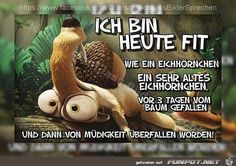 funny picture 'I am FIT.jpg' from Floh today. One of 1014 files in … funny picture & # i am today FIT. One of 1014 files in … funny picture 'I am FIT.jpg' from Floh today. One of 1014 files in … funny picture & # i am … Elle Fitness, Zumba Funny, Morning Pictures, Morning Humor, Wonderwall, Workout Humor, Ice Age, Man Humor, Haha