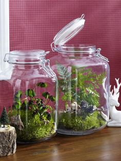 In großen Einmachgläsern lassen sich Moos und kleine Pflanzen zu Landschaften arrangieren, vielleicht auch noch ein paar kleine Plastiktierchen.