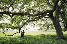 Photography inspiration: There is nothing more romantic that wedding shots under an old tree