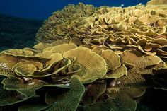 coral reefs/site