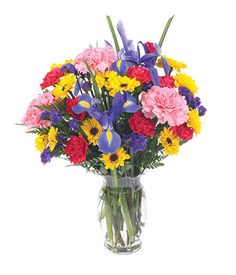 brilliant bouquet of blue irises, red and pink carnations, viking poms and mini carnations