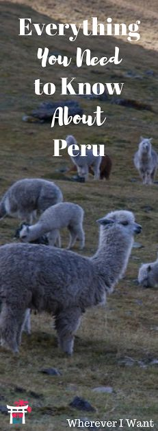 From logistics to Wi-Fi to transportation to money to language - read before going to Peru!