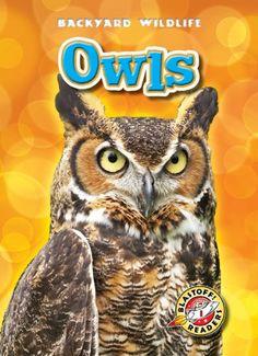 Owls (Blastoff! Readers: Backyard Wildlife), AR Level 1.6