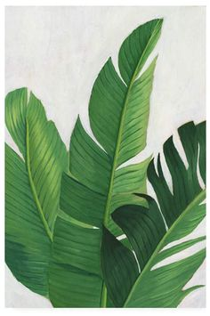 Shop Pura Vida - Tropical Leaves Square Paper Coaster created by worldartgroup. Plant Painting, Plant Art, Tropical Home Decor, Tropical Interior, Tropical Art, Tropical Plants, Wall Murals, Wall Art, Wall Decal