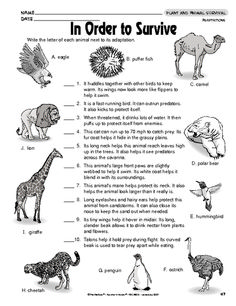 animal adaptations create wanted posters science animals animal adaptations pinterest. Black Bedroom Furniture Sets. Home Design Ideas