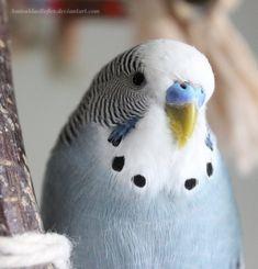 Portrait of a greyish blue bird by AmiraldasReflex