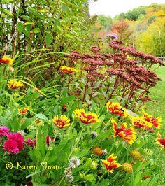 Gaillardia & Sedum - Autumn garden