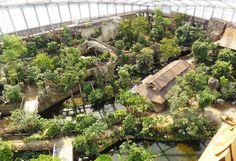 tropical zoo enclosure - Google Search