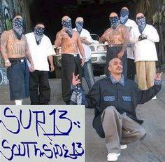 MS 13 or Mara salvatrucha is the deadliest gang in america and originated in el salvador  O