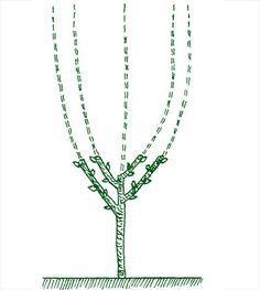 kliknutím obrázek zvětšíte Silver, Gardening, Jewelry, Jewlery, Jewerly, Lawn And Garden, Schmuck, Jewels, Jewelery