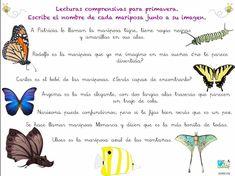 lectura comprensiva de frases, las mariposas