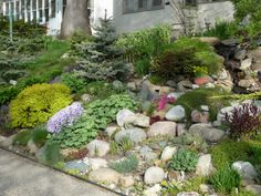Hillside Rock Garden-perfect for the hills on our property!