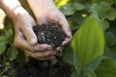 Coffee Grounds & Gardening: Using Coffee Grounds As Fertilizer