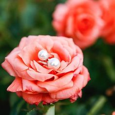 Glorious roses & our double pearl ring photographed @victoriametaxas check out her new jewellery blog #aurorastories #photography #jewellery #jewellerystyling #londonblogger #fashion #victoriametaxas #photographer