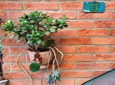 Succulente in vaso su parete