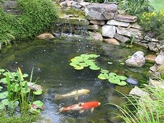 Love koi ponds for-the-yard-outside-living