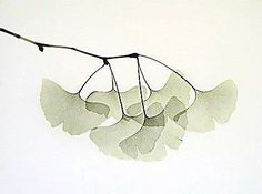 http://ariane.blogs.lalibre.be/album/tokyo-l-automne-by-ariane/