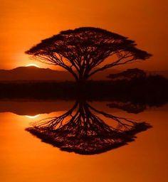 Por do sol com reflexo de árvore