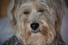 Photo by nualabarr Pets, Animals, Animales, Animaux, Animal, Animais, Animals And Pets