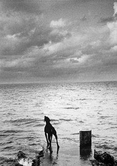 © Michel Vanden Eeckhoudt - Mauritius, 1991