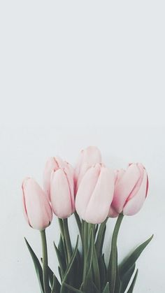gambar flowers, tulips, and pink