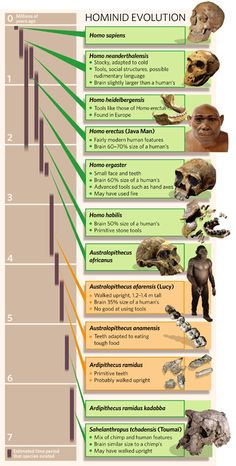Hominid evolution -A chart demonstrating the evolution of the hominids using biological anthropology. Earth Science, Life Science, Science And Nature, Homo Habilis, Biological Anthropology, Forensic Anthropology, Anthropologie, Human Evolution, Evolution Science