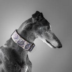 Martingale de fantasía.  #galgo #martingale #dogstagram #perros #dogs #dogcollar #españa #moda