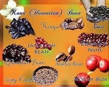 Types of Coffee Beans in the World Arten von Kaffeebohnen in der Welt Coffee Type, Best Coffee, Iced Coffee, Coffee Drinks, Miele Coffee Machine, Black Rock Coffee, Coffee Withdrawal, Types Of Coffee Beans, Coffee Facts