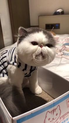 Ideas baby funny face cats for 2019 Baby Animals Pictures, Funny Animal Pictures, Cute Baby Animals, Animals And Pets, Funny Animals, Cute Kittens, Cats And Kittens, Funny Cat Videos, Funny Cats