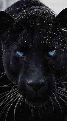 Majestic Animals, Rare Animals, Cute Baby Animals, Animals And Pets, Funny Animals, Beautiful Cats, Animals Beautiful, Beautiful Pictures, Tier Wallpaper