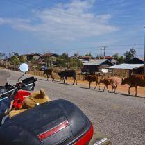 Sharing the road in central Laos. Trueworldtravels.com