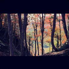 Patagonia Argentina Estamos de Scouting... Subiendo el sendero hacia el Tronador , los colores del otoño se manifiestan..