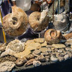 GALERIES PHOTOS | Mineral & Gem